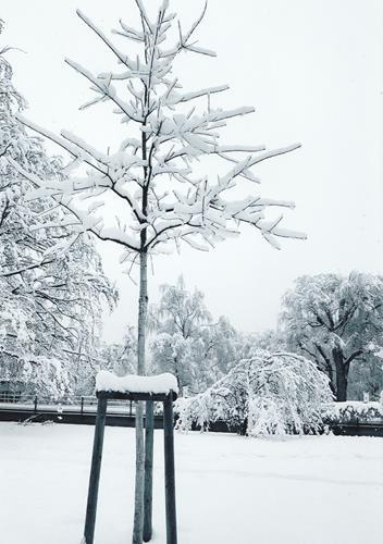 Brigitte Raz-Goldau, Winter 2021   1-5      Nr.1, Landscapes: Winter, Plants, Contemporary Art