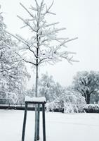 Brigitte-Raz-Goldau-Landscapes-Winter-Plants-Contemporary-Art-Contemporary-Art