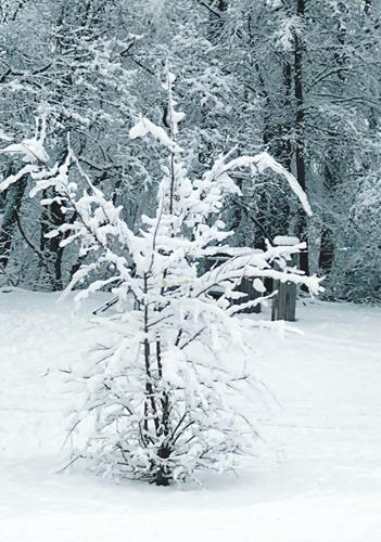 Brigitte Raz-Goldau, Winter 2021  1-5     Nr. 2, Landscapes: Winter, Nature, Contemporary Art