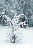 Brigitte-Raz-Goldau-Landscapes-Winter-Nature-Contemporary-Art-Contemporary-Art