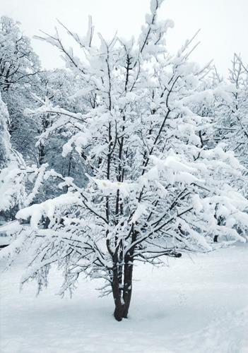 Brigitte Raz-Goldau, Winter 2021   1-5       Nr. 3, Landscapes: Winter, Nature, Abstract Art