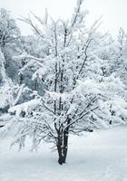 Brigitte-Raz-Goldau-Landscapes-Winter-Nature-Modern-Age-Abstract-Art