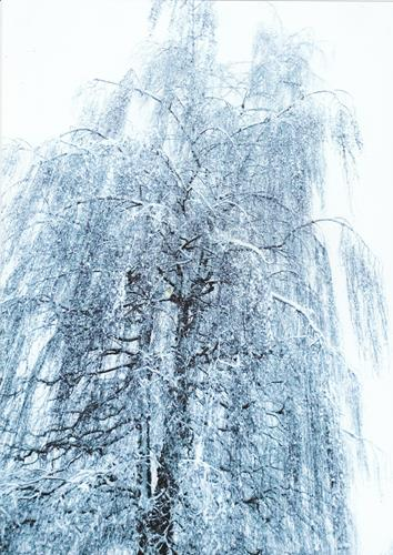 Brigitte Raz-Goldau, Winter 2021  1-5    Nr. 5, Landscapes: Winter, Nature, Contemporary Art