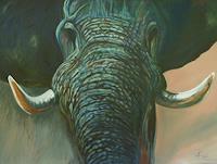 Anne Petschuch, Elefant