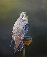 A. Molina, Falcon