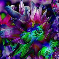U. Kröll, Blüten - Impressionen 1  - Digital-ART - limitiert (01/10)
