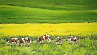 Konrad-Zimmerli-Landscapes-Spring-Miscellaneous-Animals-Modern-Age-Naturalism