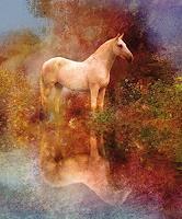 R. Gärtner, Horse