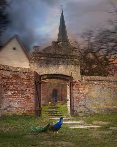 Robert Gärtner, Blue-peafowl, Miscellaneous, Miscellaneous Landscapes