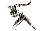 Phil Andrey, zebra man