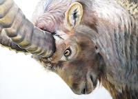 Vera-Kaeufeler-Nature-Animals-Land-Modern-Age-Naturalism