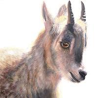 Vera-Kaeufeler-Animals-Land-Nature-Modern-Age-Abstract-Art