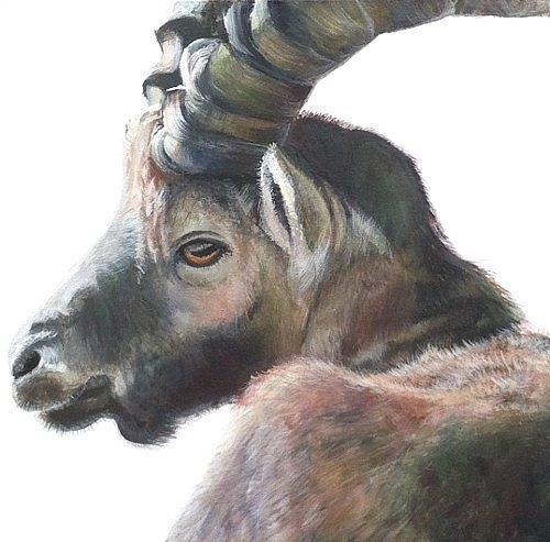 Vera Käufeler, Al Caprone, Animals: Land, Hunting, Abstract Art