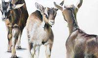 Vera-Kaeufeler-Animals-Land-Nature-Modern-Age-Abstract-Art