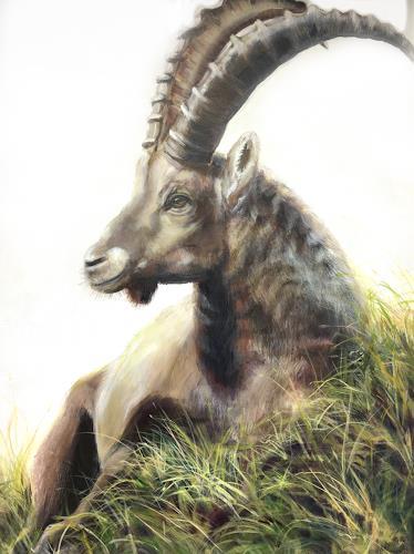 Vera Käufeler, Don Juan - entspannt, Animals: Land, Nature, Photo-Realism