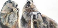 Vera-Kaeufeler-Animals-Nature-Modern-Age-Photo-Realism