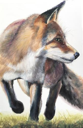 Vera Käufeler, Red Fox, Nature, Animals: Land, Photo-Realism