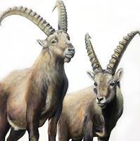 Vera-Kaeufeler-Nature-Earth-Animals-Land-Modern-Age-Photo-Realism