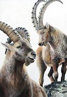 Vera-Kaeufeler-Nature-Animals-Land-Modern-Age-Photo-Realism