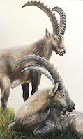 Vera-Kaeufeler-Nature-Animals-Modern-Age-Photo-Realism