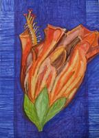 Marija-Weiss--Dr-Plants-Flowers-Nature-Modern-Age-Expressive-Realism