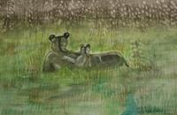 Marija-Weiss--Dr-Animals-Land-Miscellaneous-Animals-Modern-Age-Expressive-Realism