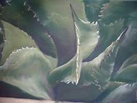 Sigrun-Laue-Miscellaneous-Plants