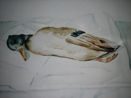 Els Driesen, dode eend, Animals: Air, Death/Illness, Expressive Realism