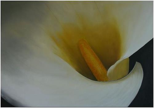 Doris Jordi, Calla, Plants: Flowers