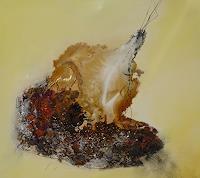 D. Jordi, Faszination eines Steines